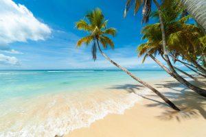 Pemandangan Pantai Cantik Dengan Tema Pokok Kelapa