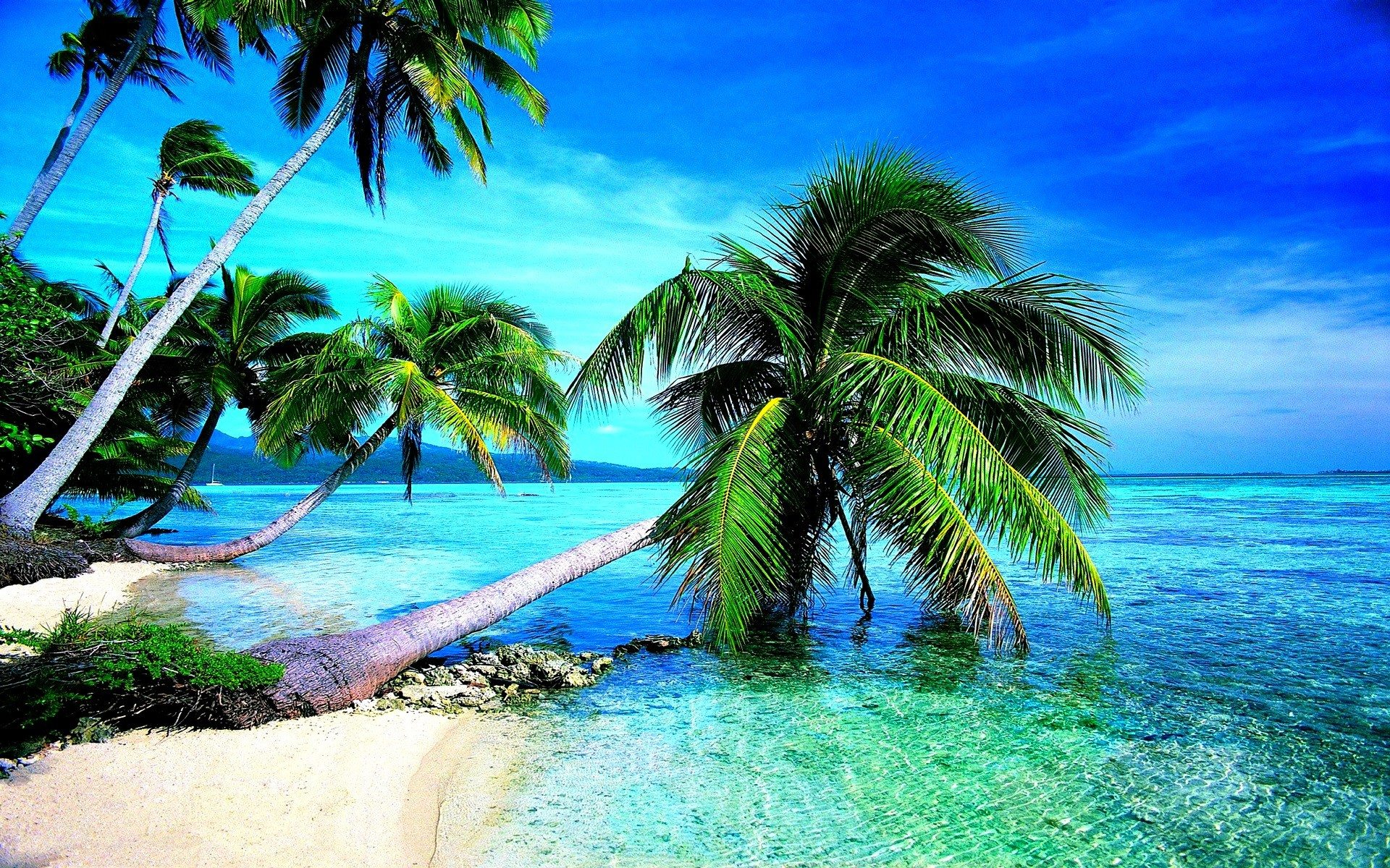 Coconut Tree On Beach HD Wallpapers