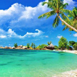 Wallpaper Pantai Cantik dengan Pemandangan Pokok Kelapa