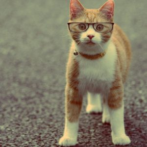 Animal Cat Wearing Glasses