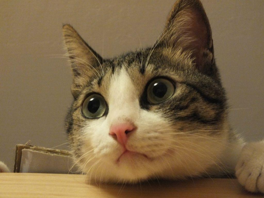 Close Up Cat Azhan Co