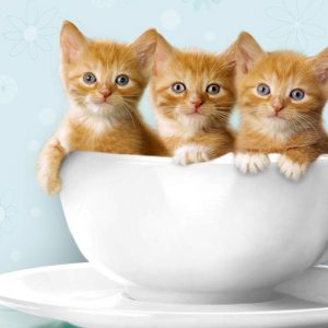 Cute 3 Little Kitten