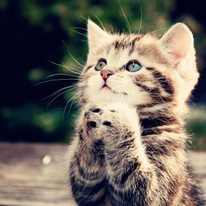 Cute Cat Praying
