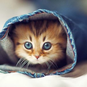 Cute Cat in Dalam Seluar Jeans