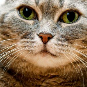 Fat Face Cat So Cute