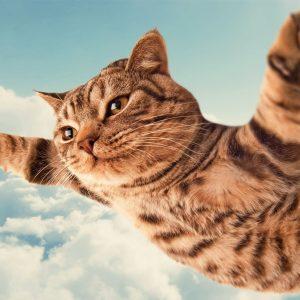 Funny Kucing Terbang