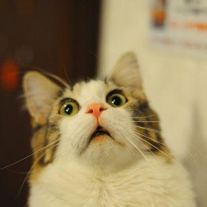 Kucing Buat Muka Terkejut