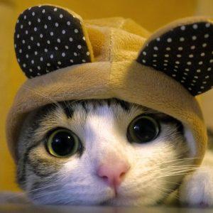 Kucing Comel Pakai Topi Baby