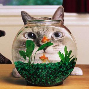 Kucing Disebalik Balang Air Ikan