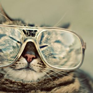 Kucing Pakai Cermin Mata