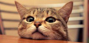 Koleksi Gambar Kucing Comel dan Lucu