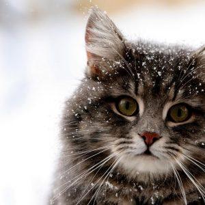 Snowing Cat