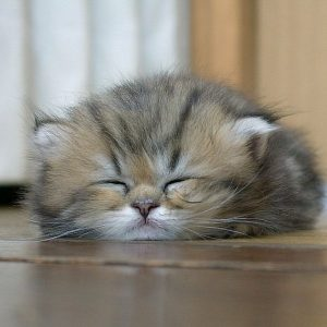 Cute Sleep Cat Image