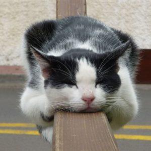 Kucing Tidur Atas Palang Beam