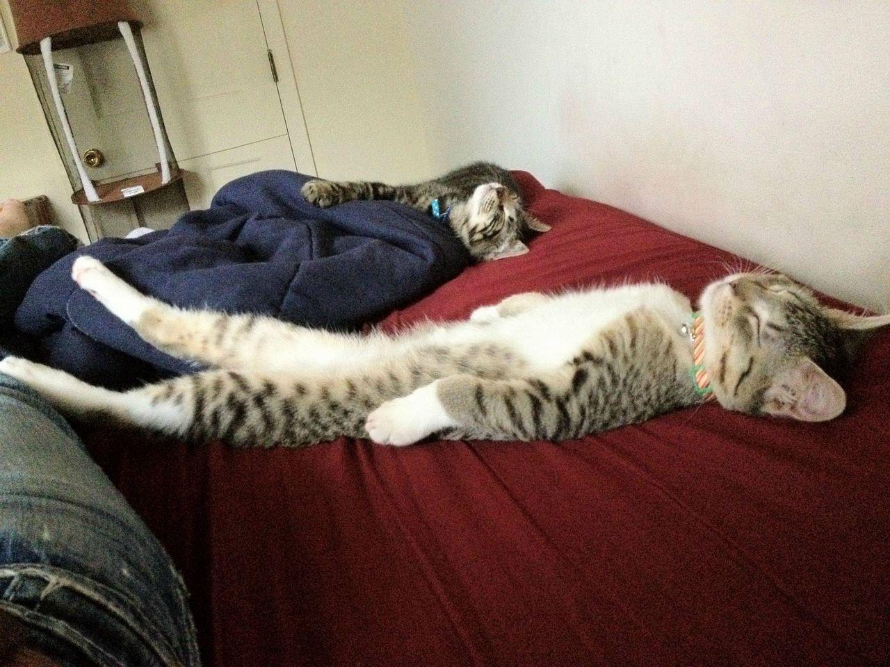 12 Gambar El Dan Lucu Kucing Tidur