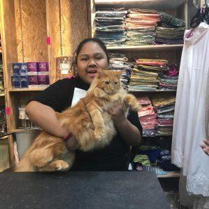 Kucing Gemuk Dan Cik B