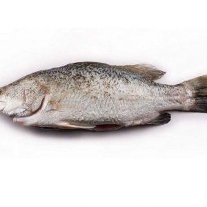 Ikan Siakap
