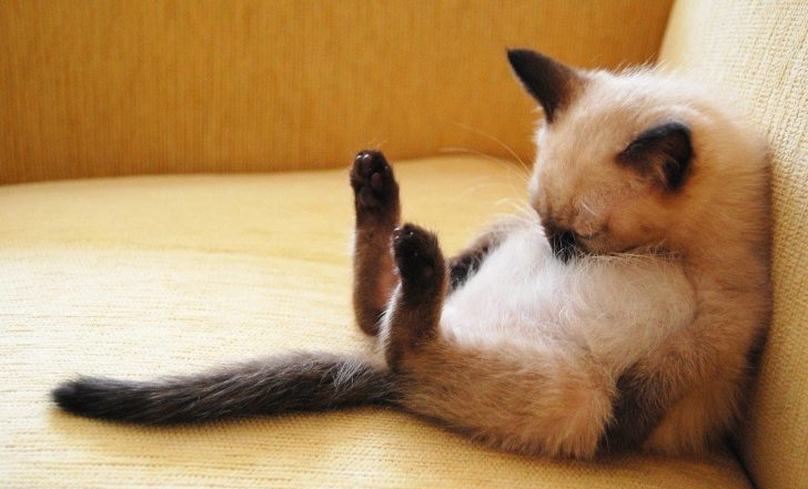 Permalink to 12 Gambar Comel dan Lucu Kucing Tidur